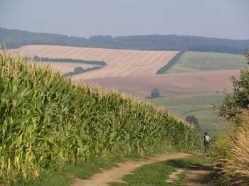 15 - De trek loopt door heuvelachtig landschap. Bergop lopen we, en bergaf wordt er gerend. Zo houden we een flink tempo erin.